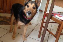 Kaio the dog / I am the kaio