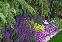 Bahçe / Bahçeler&Çiçekler