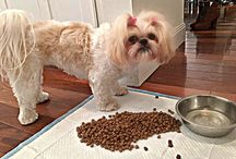 Shih Tzu Food and Diet