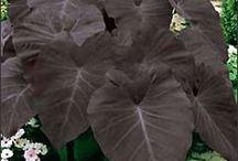 ideer til beplantning i haven