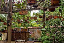 jardim orquidea