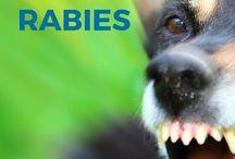 Veterinary info