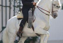 konie foto