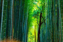 JAPAN / Japanese inspiration for art, travel, gardens,