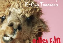 Alpacas That Drink Coffee / SingleJo just might be run by Alpaca's but we'll never tell.  In the meantime see what kind of wisdom these Alpaca drinking peeps offer to pinner everywhere/