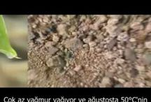 Permakültür - Permaculture