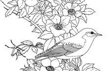 Çiçek ve kuş çizimleri