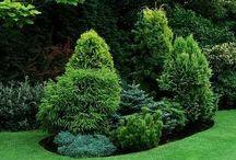 Conifer gardens