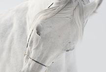 HORSES / by Diana Popp
