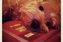 my Dog's