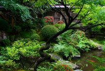 Japanese Gardens / If I had the money - I would create a Japanese Garden.