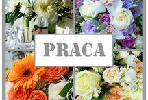 Kwiaciarnia KAJA / Jeśli kochasz kwiaty, lubisz pracę z ludźmi a tworzenie jest Twoją pasją, dołącz do nas! Poszukujemy kreatywnej i energicznej osoby do pracy w kwiaciarni na stanowisko florysty.  Czekamy na Twoje CV & portfolio: kaja.kwiaciarnia@wp.pl www.kaja.lebork.pl