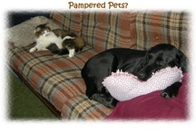 Our Pampered Pets