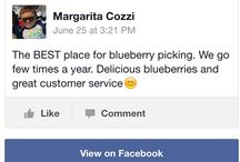 DiMeo Farms Reviews / Aside from over 87,000 likes on our nationally popular Facebook profile, we have so many countless happy customers that have really great things to say in DiMeo Farms Reviews of our DiMeo blueberries, blueberry plants and gorgeous u-pick blueberry farm in the heart of the NJ Pine Barrens. Here are just a few examples of DiMeo Blueberry Farms and their experiences in dealing with us. CALL (609) 561-5905 to schedule blueberry picking appointment. We greatly appreciate your business. Thank you.