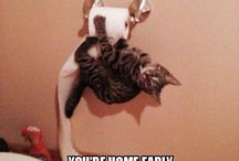 Funny Cats / Cats that make you laugh until your insides hurt