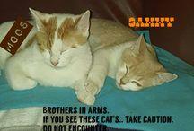 Sam & Moos / mijn mannetje's