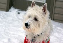 2013 Winter Snow with the Dogs / Here at PrestonSpeaks.com the dogs decided since it was a snow day we HAD to go out and play in the snow!   #dog #westie #snow