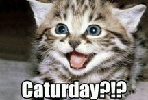 #Caturday / Every cats favorite day of the week :) / by EntirelyPets.com