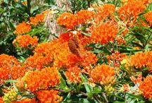 florida native plants