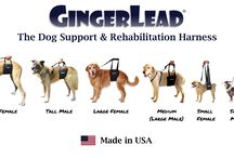 GingerLead Dog Slings / The GingerLead is a premium dog sling with a leash & handle to help dogs that have weak hind legs walk.  It's ideal for aging dogs needing some assistance with their mobility or  balance, dogs recovering from hip, knee or back injuries, or dogs suffering from degenerative myelopathy, arthritis, or other debilitating conditions.  Available for toy to giant breed dogs.  MADE IN USA.