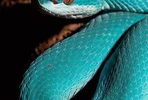 Slangen