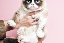 Super gato enfadao XD
