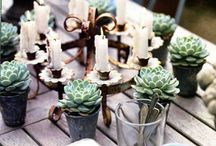 succulent style / creative uses for succulents