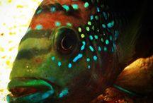 Acuariofilia / Mis peces y acuario
