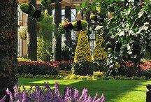 Природа, сады, зимн сад