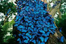 Pillangók, lepkék