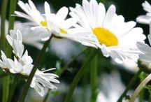 My flower photos