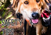 Spring Activities with Pets / Get outside and enjoy the weather with these pet friendly activities!