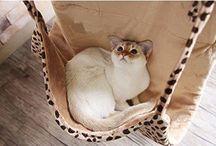 猫 ハンモック&家具