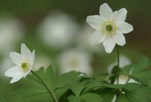 Kevät-spring
