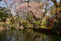東京のさくら 2016 / 今年のさくらを都内の各地で撮りました。そのまとめです。