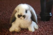 Conigli/Bunnies