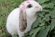 ♥ Rabbits ♥