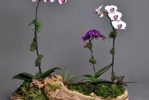 Orchids I want