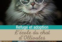 """Chats / Tout ce qui tourne autour des chats. Comme le #deschatsetdeslivres ou mon action en faveur du refuge """"L'École du chat"""""""