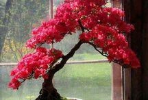 Bonsai/terrariums and other cool shiz