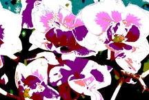 ORCHIDEE & FLOWERS andrea mattiello / #andreamattiello #mattiello #orchidea #flower #orchidee #art #arte #contemporanea #photography #fotografia #digitale #digital #art #work #artist #artista #emergente