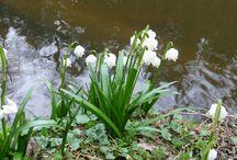 jaro (spring)