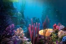 podmorske fotografie