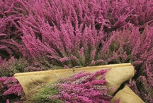 Scottish Wildlife/Wildflowers / Nature in Scotland / by Rita Wood