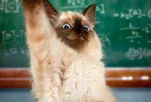 lollige katten/poezen. / over grappige katten/poezen.