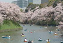 #Tokyo Sakura!
