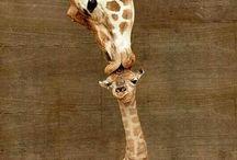állat anya baba
