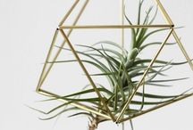 Sturdy kill proof house plants / by Bea Matis Kwasnaza
