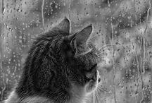 Cats / by Karen Foley