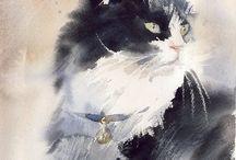 B katter